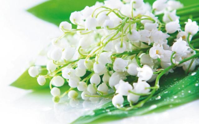 Прийміть сердечні вітання з нагоди чудового весняного свята - 8 Березня!